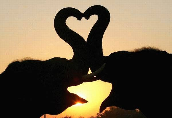 Elephants Showing Some Love