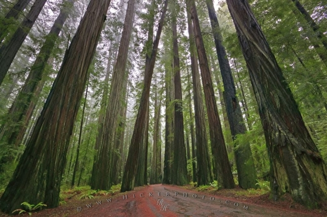 29-Photos-That-Will-Inspire-You-To-Travel-redwood_national_forest