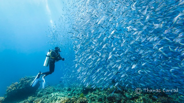 29-Photos-That-Will-Inspire-You-To-Travel-Scuba-Dive