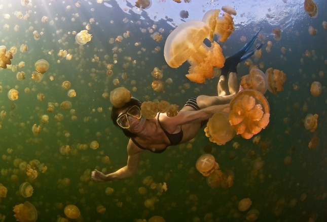 29-Photos-That-Will-Inspire-You-To-Travel-Stingless-Jellyfish-in-Micronesia