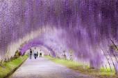 Wisteria-Tunnel-Kawachi-Fuji-Gardens-Fukuoka-Kitakyusyu-Japan 7
