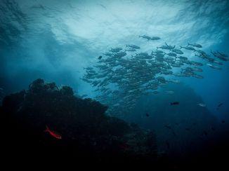 Oceania-RedFish