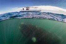 underworld-underwater life