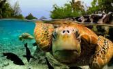 underworld-underwater life12
