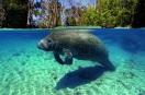 underworld-underwater life6