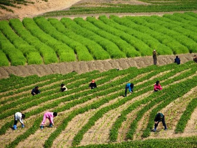 farming-in-north-korea