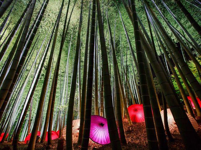 EnlightenedNature-BambooForest-Kyoto-JAPAN