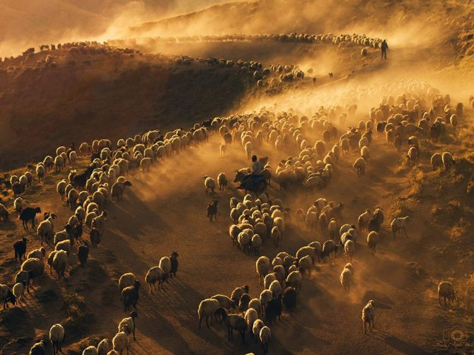 Flock-of-Dust-NemrutMountainTURKEY