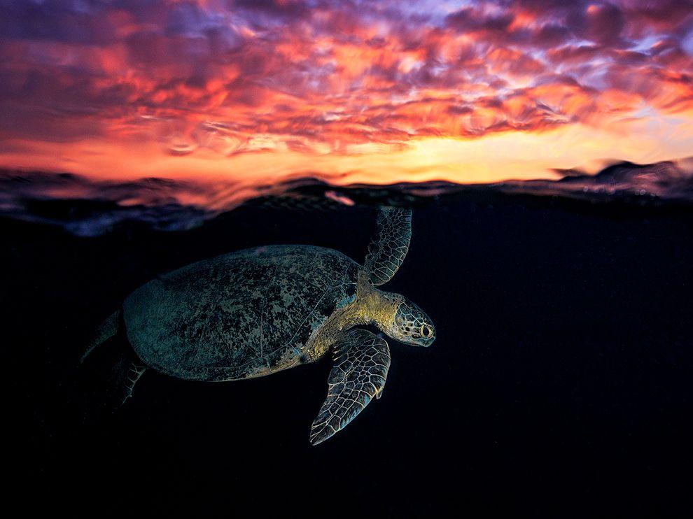 A-Turtle-UnderTheSun-MayotteIsland-Comoros