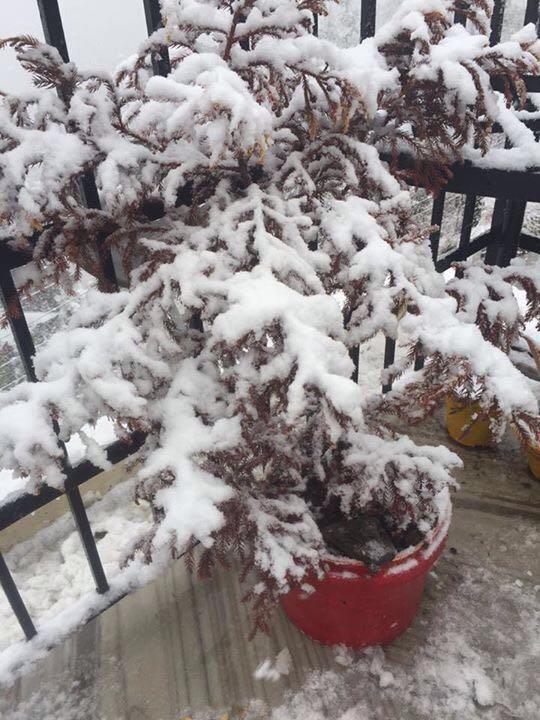 Snowfall2016ShimlaHimachalINDIA