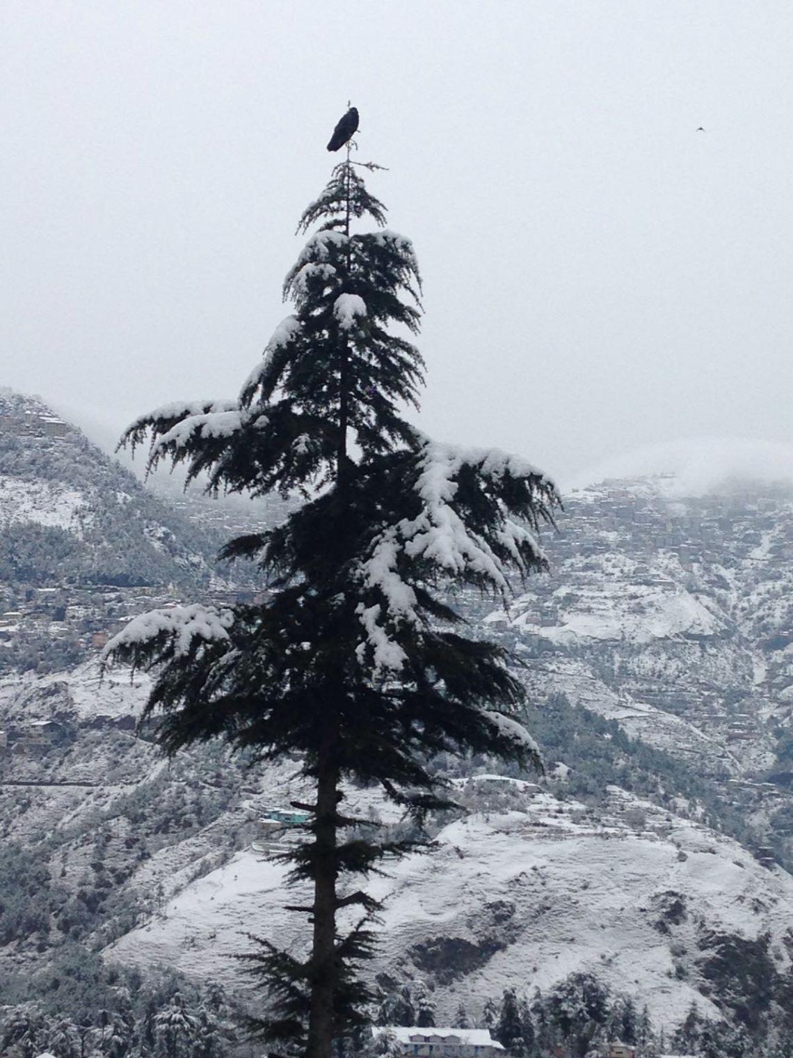 Snowfall2016ShimlaHimachalINDIA3